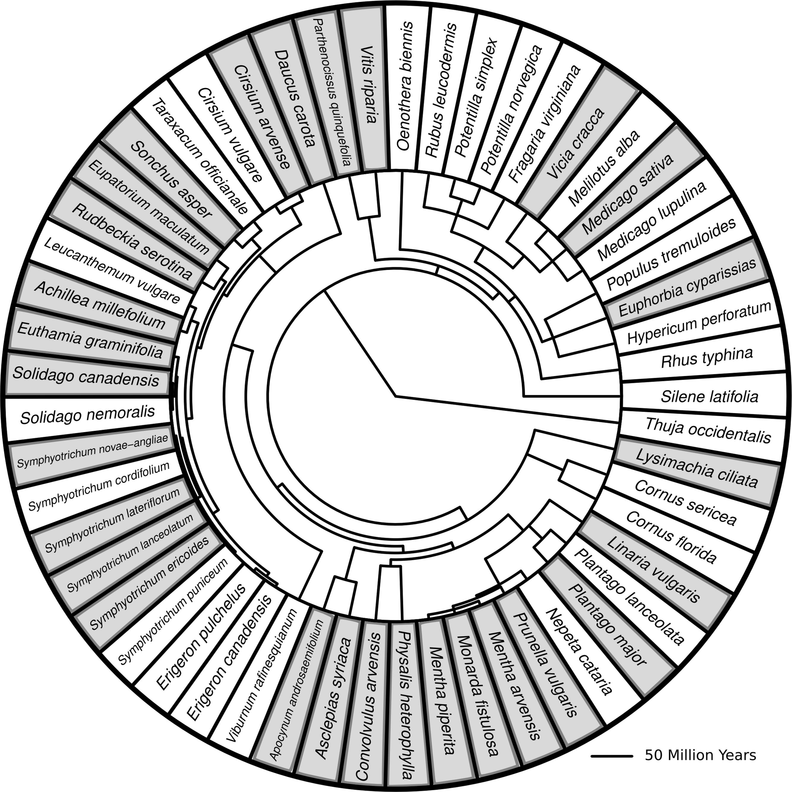 Proofreadingwebsite Web Fc2 Com: Species Diversity Literature Review