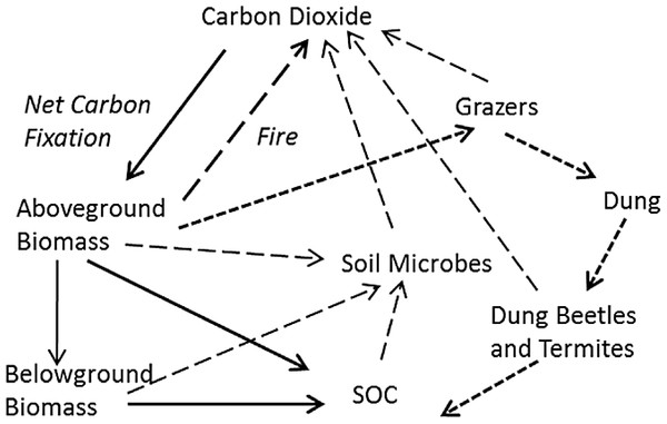 Hypothetical major fates of carbon in tropical grassland, as the basis for a practical soil carbon dynamic model.