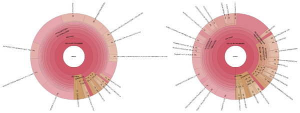 Taxonomic visualization of two human gut samples.