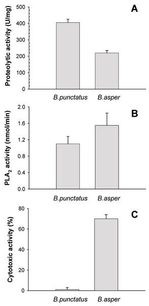 Proteolytic (A), phospholipase A2 (B), and cytotoxic (C) activities of Bothrops punctatus venom, compared to the venom of Bothrops asper