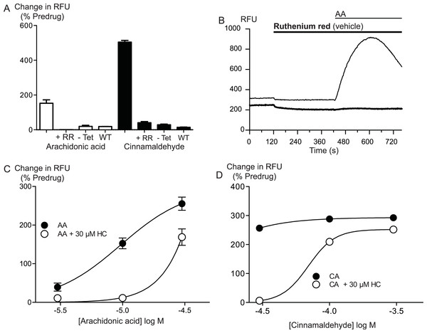 Arachidonic acid activates hTRPA1.