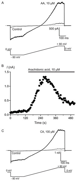 Arachidonic acid-induced currents in HEK 293 cells expressing hTRPA1.