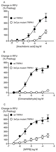 Distinct amino acid residues in hTRPA1 determine arachidonic acid and cinnamaldehyde activation.