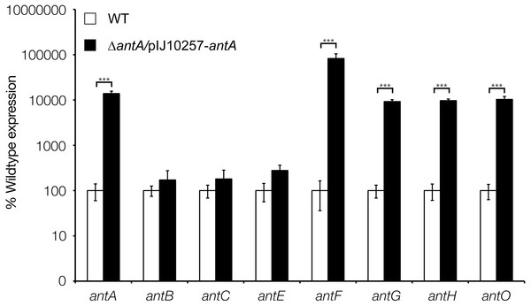 σAntA alone is sufficient to activate transcription of antFG and antHIJKLMNO in 42 h old cultures.