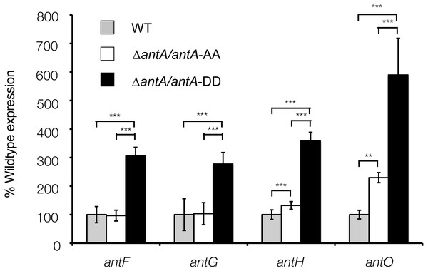 Altering the terminal Ala-Ala motif of σAntA results in higher expression of σAntA targets.