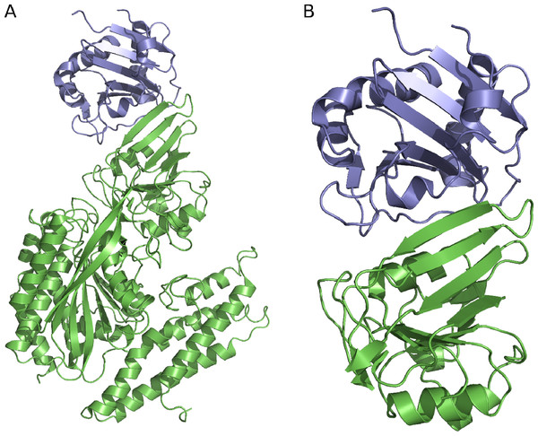 The GP1/hTfR1 complex.