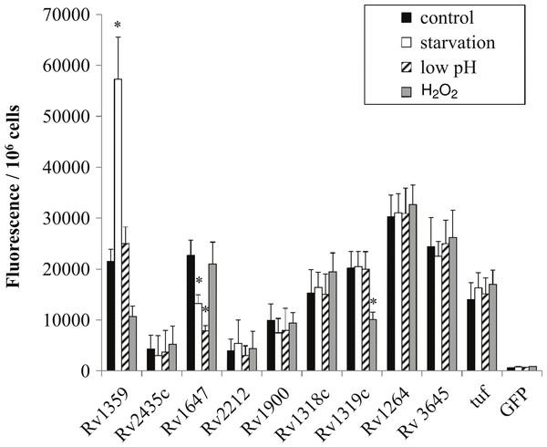 Regulation of M. tuberculosis adenylate cyclase genes.