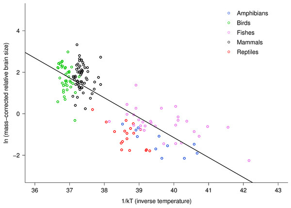 The natural logarithm of body mass-corrected relative brain size vs. inverse temperature in vertebrates.