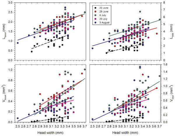 Regressions of oocyte variables on head width of female Megachile rotundata (Fabricius, 1787) (Hymenoptera: Megachilidae) for each of the five sampling dates.
