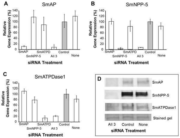 Suppression of schistosome ectoenzyme genes using RNAi.