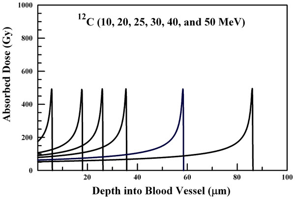 Absorbed dose profiles for 10.0 (far left curve), 20.0, 25.0, 30.0, 40.0, and 50.0 (far right curve) MeV 12C ions in water.