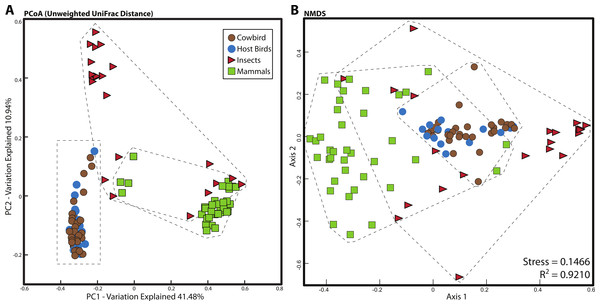 Relationship between mammal, insect and bird microbiota.