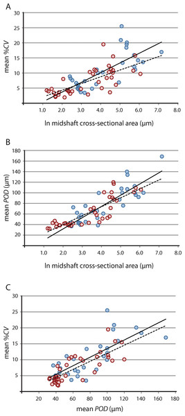 Linear regression of vascular growth proxies against size (midshaft cross-sectional area) from limb bone elements.