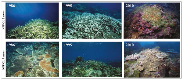 Coral communities at NPP OL over time showing the condition of reefs at 3 m and 7 m in 1986, 1995 and 2010.
