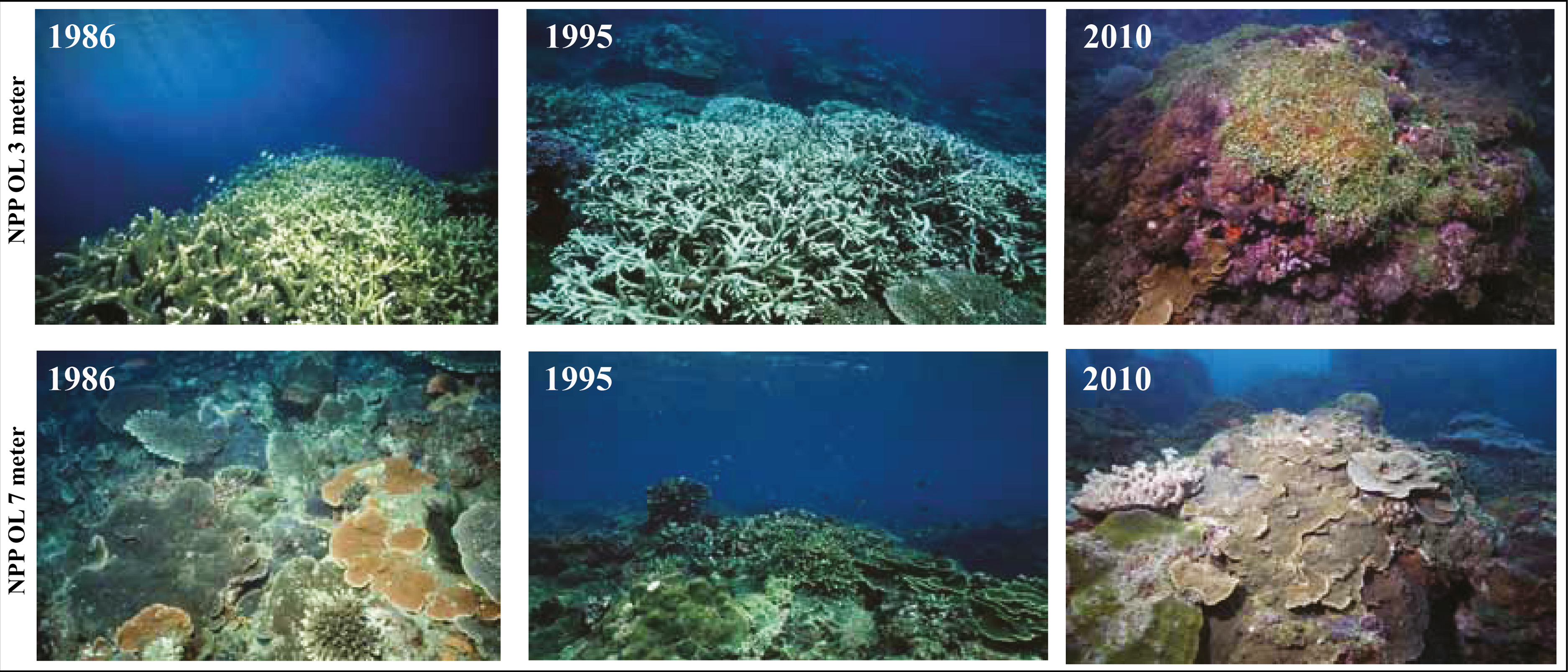 how to stop coral bleeching