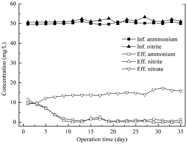 Nitrogen removal performance of control reactor feeding with synthetic wastewater.