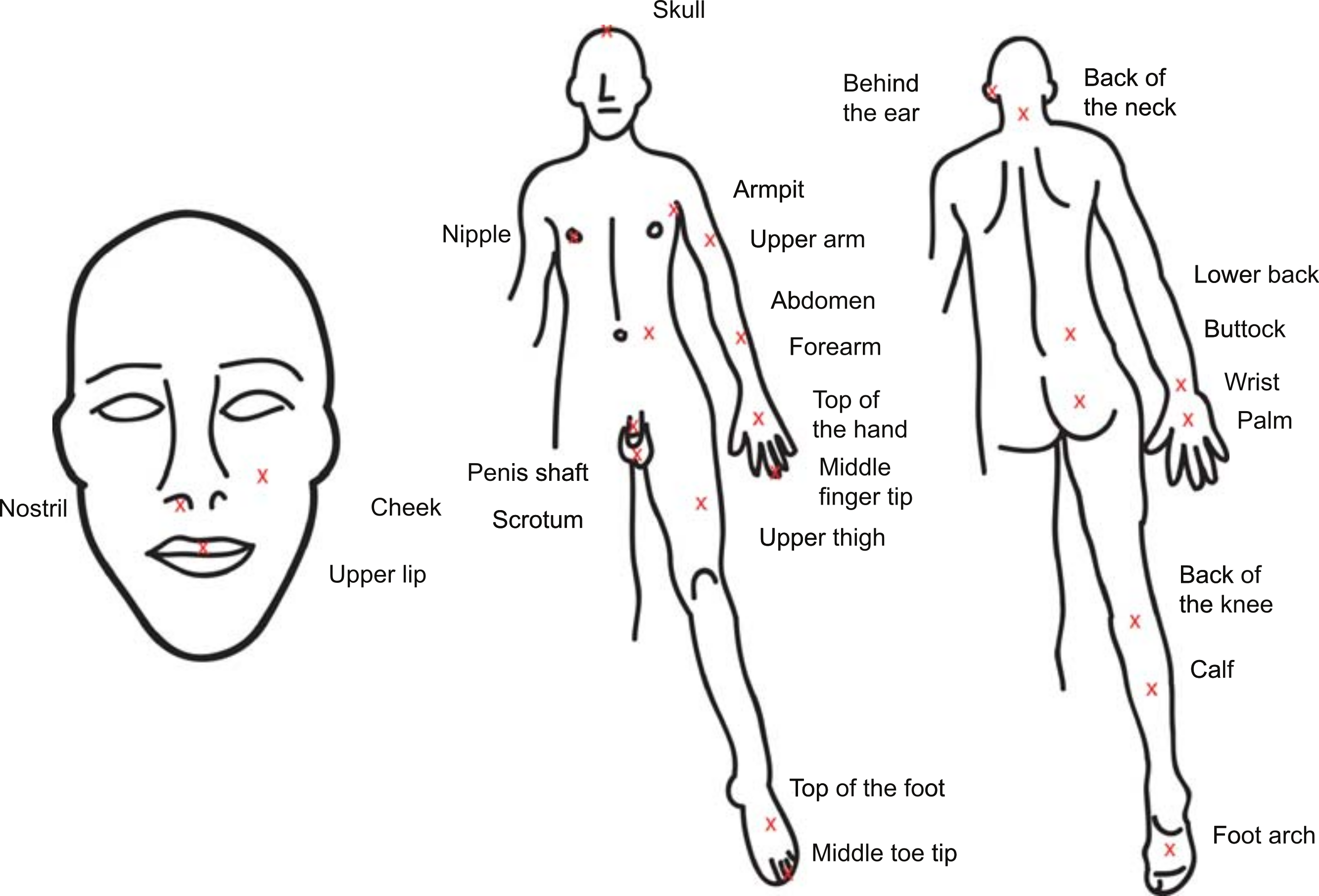 Honey Bee Sting Pain Index By Body Location Peerj