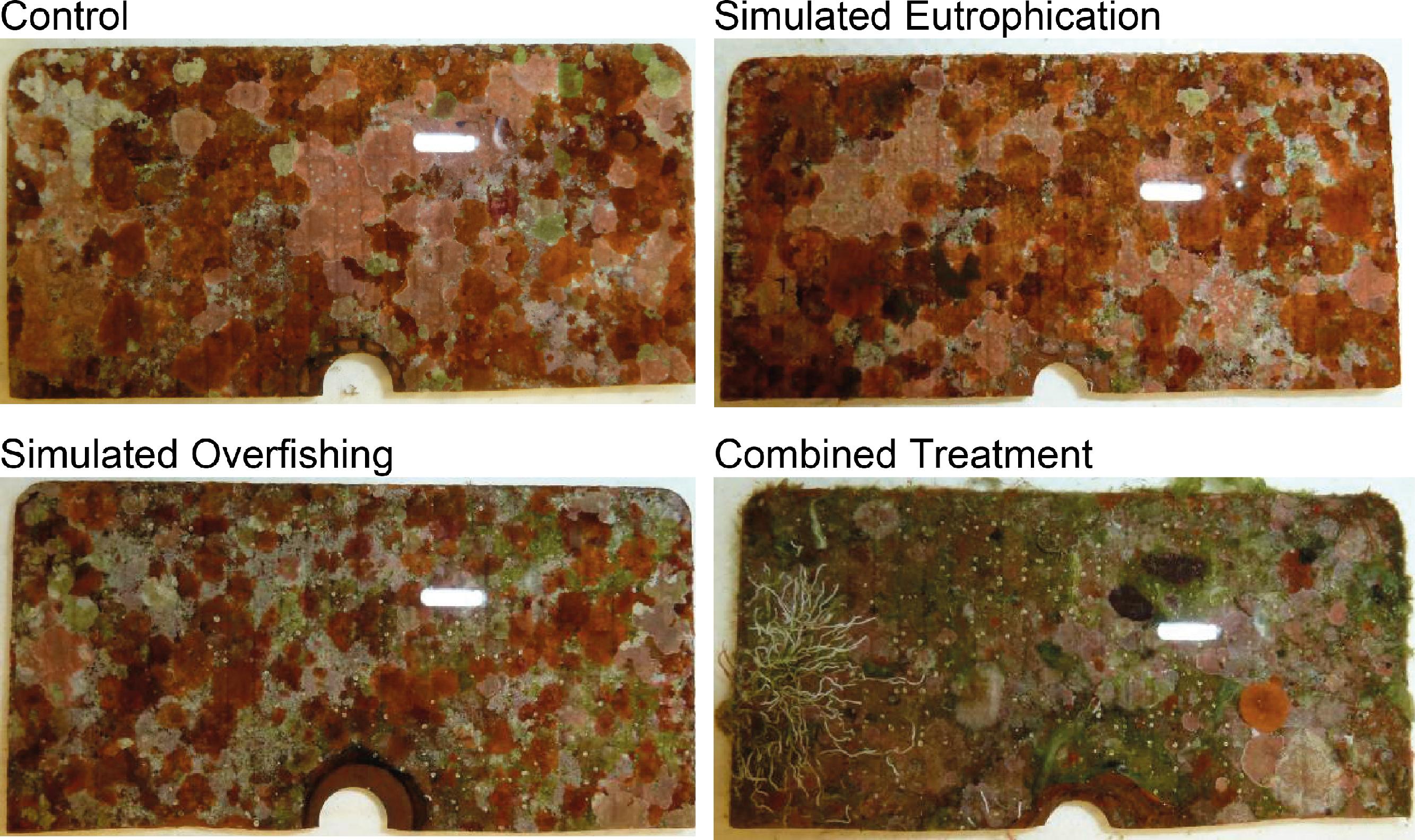 beste verkoop de goedkoopste specifiek aanbod In situ effects of simulated overfishing and eutrophication ...