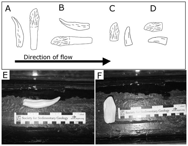 Examples of orientations of tooth casts.