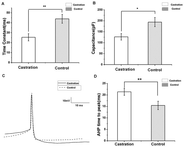 The differences in membrane time constant, capacitance and AHP time to peak between the castration and control groups.
