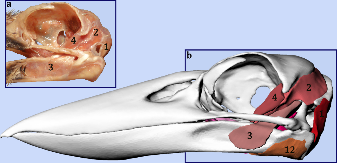 An Interactive Three Dimensional Approach To Anatomical Description
