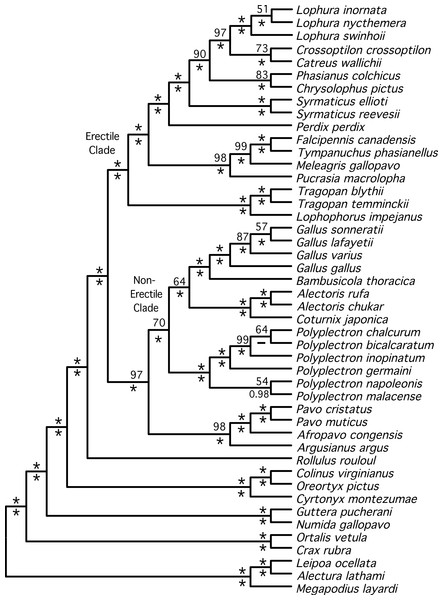 Cladogram representing the partitioned ML tree estimated from the total evidence (nuclear + mitochondrial) dataset.