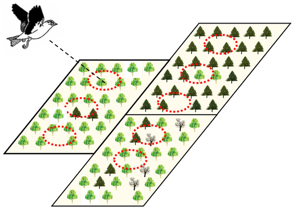 Illustration of the potential hierarchical organization of point- and stand-level forest attributes hypothesized to be influential on bird movement and ranging in heterogeneous production forest landscapes.