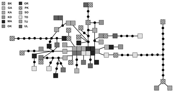Statistical parsimony network for 924 bp mitochondrial DNA sequence.
