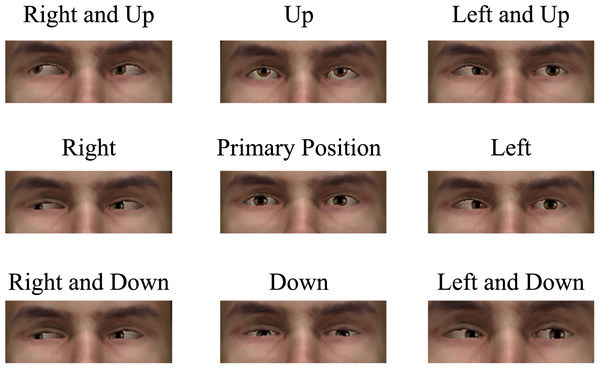 Example eye position chart demonstrating each of the nine eye positions examined when performing an ocular motility test.