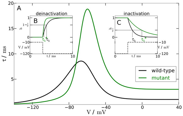 Inactivation time constant as a function of membrane potential.