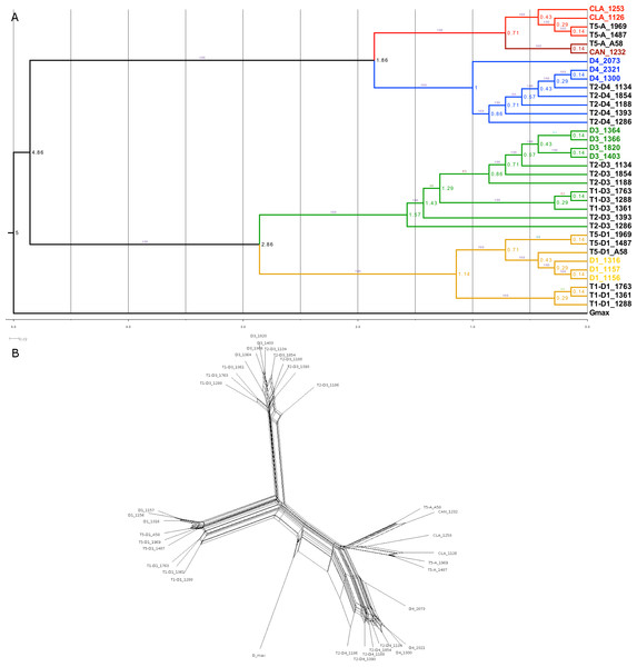 Phylogenetic relationship in the Glycine perennial polyploid complex.