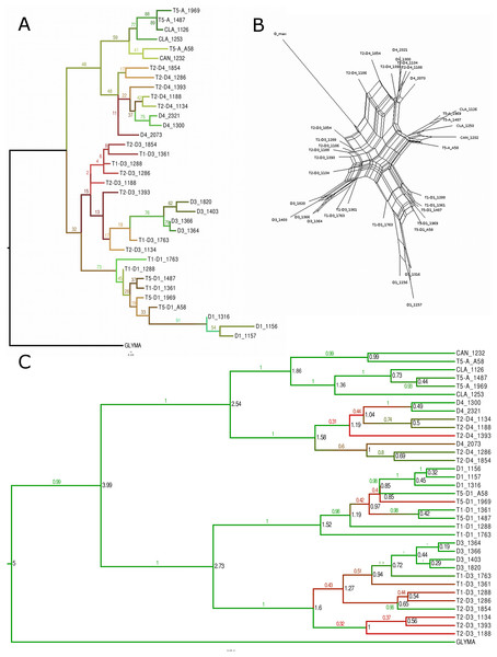 Phylogenetic analysis for the Glyma02g11580 locus.