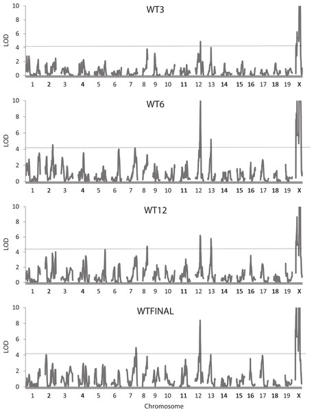 Quantitative trait locus maps of body weight at each of the four ages.