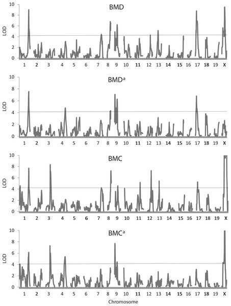 Quantitative trait locus maps of four bone traits.
