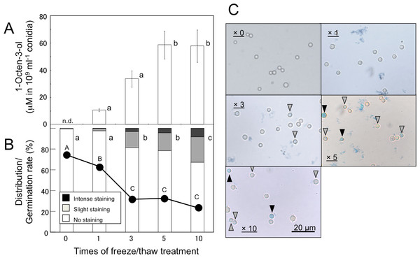 Effect of freeze/thaw treatment on the amount of 1-octen-3-ol and on the integrity of conidia.