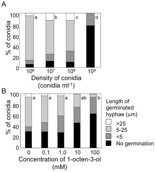 Germination of conidia and elongation of hyphae were suppressed under high conidial density (A), and in the presence of high concentration of 1-octen-3-ol (B).