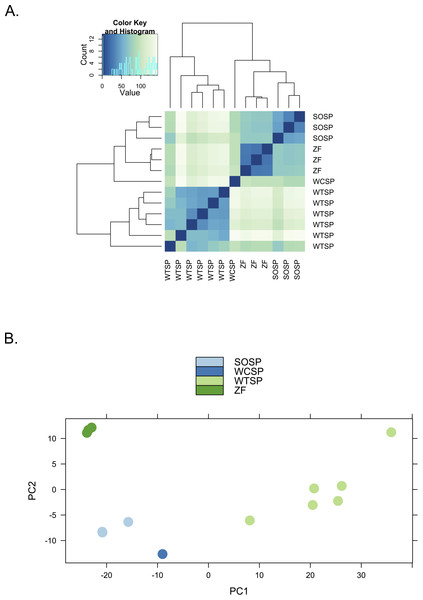 Clustering of expression profiles from four songbird species.