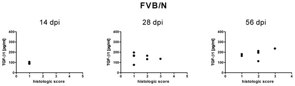 Relationship of free TGF-β1 content in the sera of FVB/N mice to inflammatory lessions.