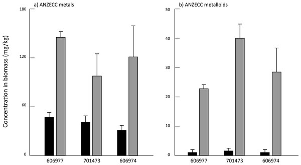 Mean concentration of (A) summed ANZECC metals and (B) summed ANZECC metalloids in the three Oedogonium species cultured in Ash Dam water at time 0 (black bars) and after three weeks of cultivation (grey bars).
