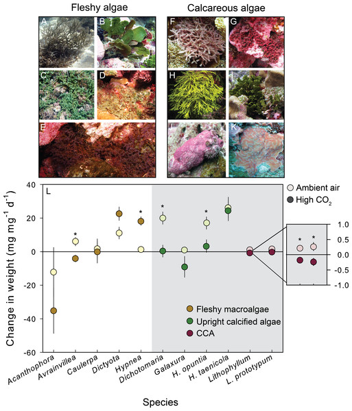 Growth response of fleshy and calcareous algae to treatment conditions.