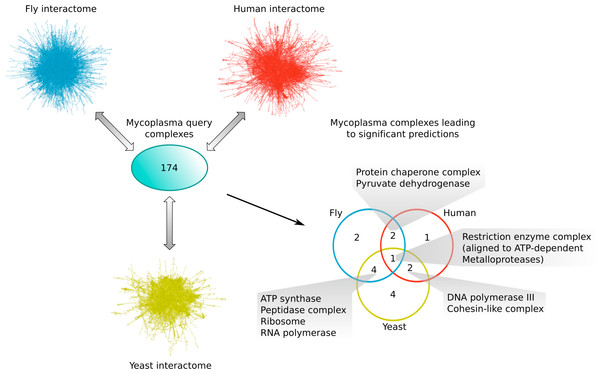 Mycoplasma complexes leading to significant predictions in yeast, fly and human.