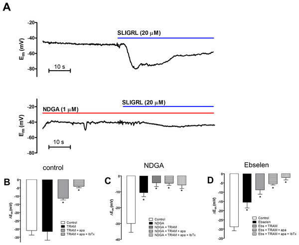 Effect of lipoxygenase inhibition on endothelium-dependent hyperpolarization (EDH) evoked by SLIGRL (20 µM) in rat middle cerebral arteries that are able to synthesize NO.