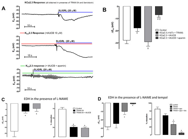 The effect of the sEH inhibitor tAUCB on the KCa2.3 component of endothelium-dependent hyperpolarization (EDH) in rat middle cerebral arteries able to synthesize NO.