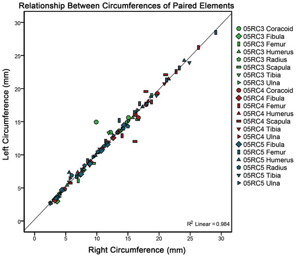 A plot comparing left versus right cyclical growth mark (CGM) and surface diaphyseal circumferences of element pairs.
