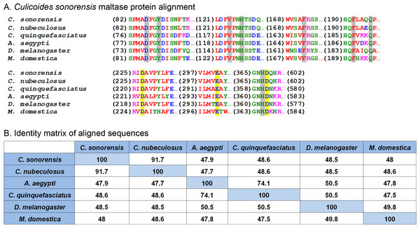 Culicoides sonorensis maltase protein.