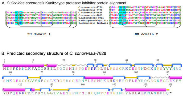 Culicoides sonorensis Kunitz-type protease inhibitor.