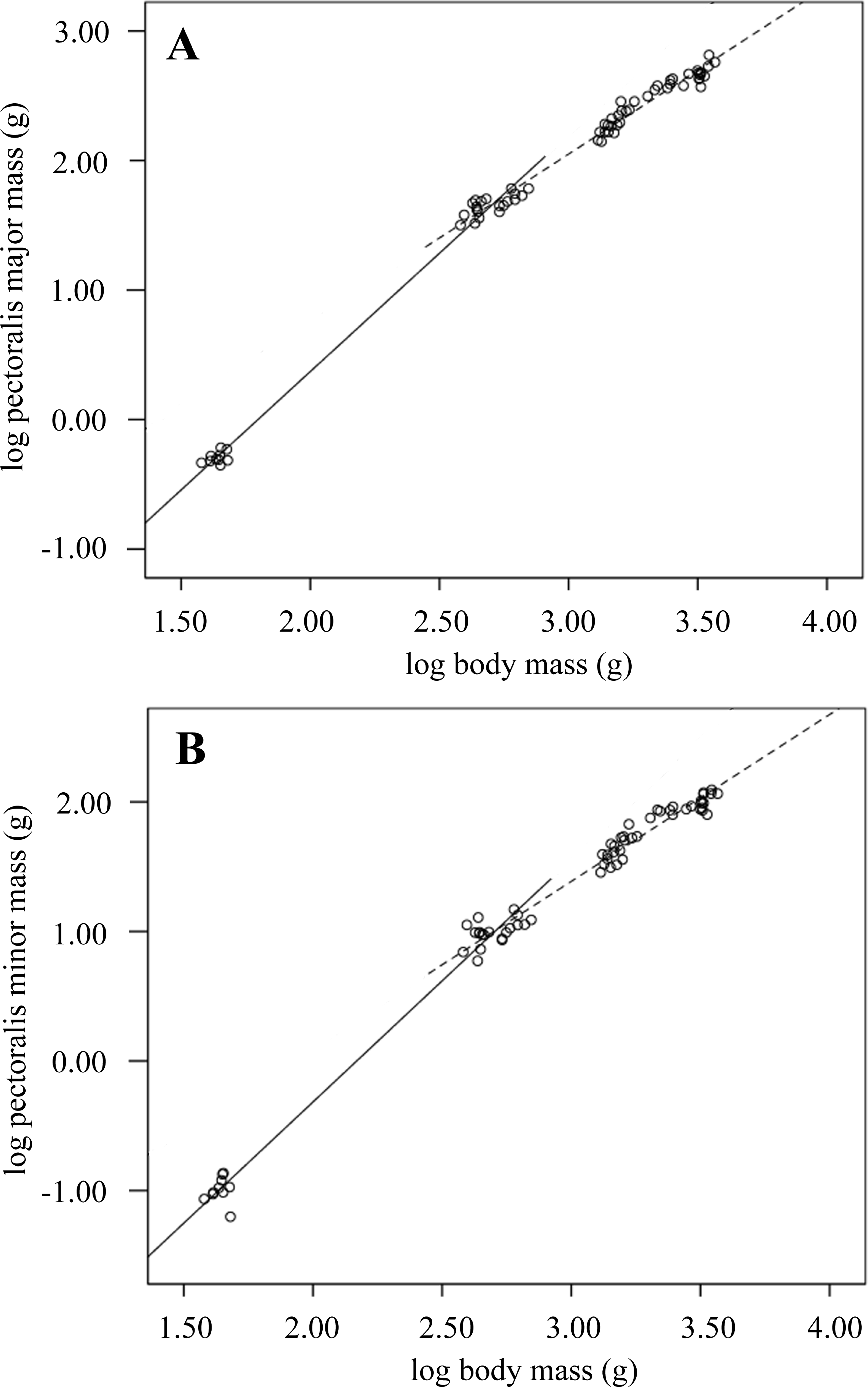 Anatomical And Biomechanical Traits Of Broiler Chickens