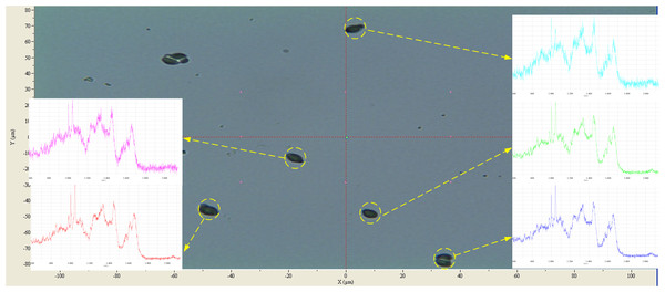The screenshot of QSpec analysis for Saccharomyces cerevisiae.
