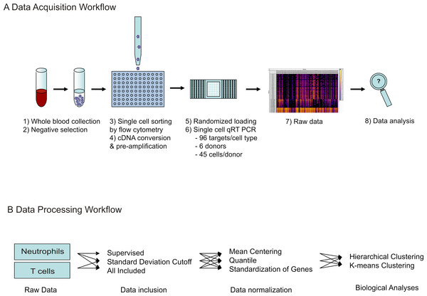 Workflow of single cell transcriptional data acquisition.
