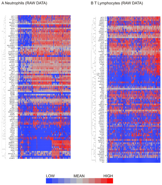 Hierarchical clustering of neutrophil and T lymphocyte data showed distinct sub-populations of cells characterized by shared patterns of gene expression.